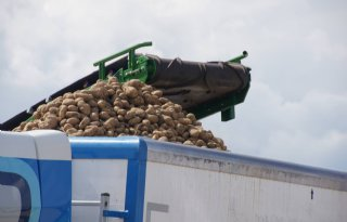 NEPG+ziet+mogelijkheden+aardappelmarkt