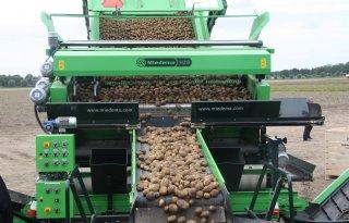 Aardappelen hoofdoogst rijpen vroeg af