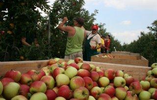82+miljoen+euro+voor+fruittelers