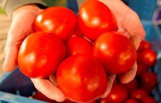 LTO+terughoudend+over+tomatengevecht