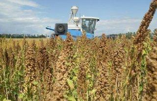 Quinoa-project Wageningen UR krijgt award