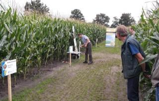 Alternatieven voor fosfaatkunstmest nodig in maïs