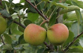 Bedrijfsscan tuinbouw Limburg gelanceerd