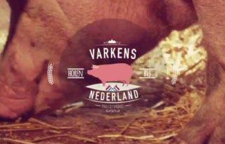 NVV%3A+Varkens+horen+bij+Nederland