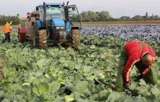 Werkgroep+gewasbescherming+vraagt+inbreng+groentetelers
