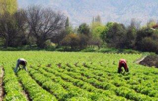 WUR helpt Chileense groentetelers