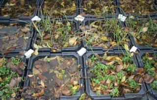 Primeur+Plant%2De%3A+stroom+uit+planten