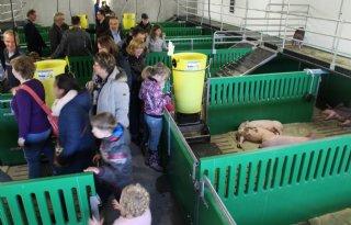 Nieuwe varkensstal van bierkratten (video)