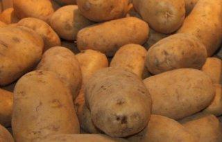 Weinig+zicht+op+herstel+aardappelmarkt