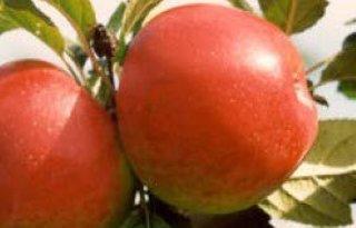 Natyra, biologische appel van de toekomst