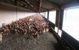 PvdD+Gelderland+wil+debat+over+vogelgriep
