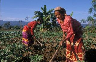 'Landbouw ook in Nepal géén gewone sector'