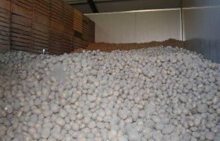 Veroudering aardappelen in bewaring