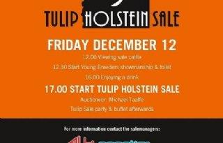 Holec+Natalie+Balisto+topper+Tulip+Sale
