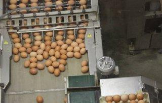 ForFarmers+voldoet+aan+Duitse+richtlijn+eieren