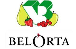 Minder+omzet+Belgische+veiling+BelOrta