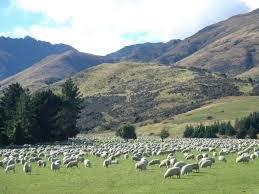 Goed jaar vlees Nieuw-Zeeland