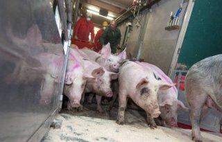 Varkensslachterij+De+Wit+naar+PALI+Group