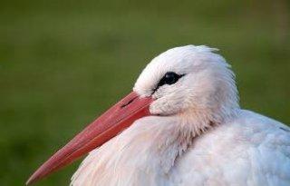 Vogelgriep+treft+meer+vogels+Duitse+dierentuin