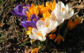 De+lente+komt+langzaam+al+op+gang