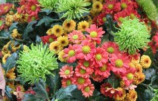 Bloemisten+aan+de+slag+voor+eerlijke+bloemen