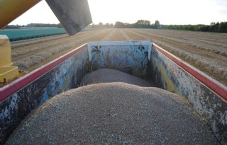 Argentini%C3%AB+schrapt+uitvoerbelasting+tarwe