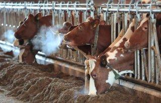 De+Vries%3A+%27Krimp+veestapel+brengt+milieudoelen+niet+dichterbij%27