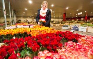 Sector+beleeft+dit+jaar+doorsnee+Valentijnsdag