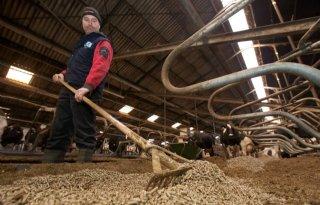 'Stropellets ideaal strooisel voor ligbox'