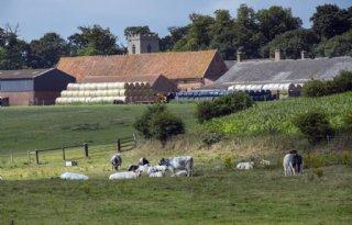 Helft+Britse+melkveehouders+wil+stoppen