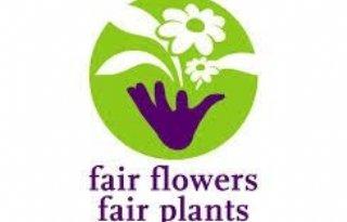 Fair+Flowers+bekijkt+samenwerking+in+Zweden