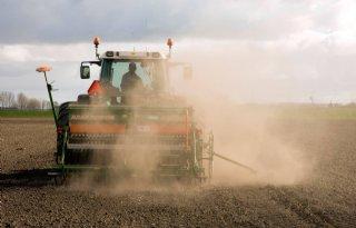 Hoop gevestigd op Italiaans raai na mislukte maïs