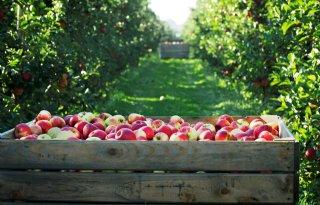 Nederlandse+appels+en+peren+naar+India
