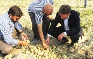 Succes+zout%2Dresistente+aardappel+Pakistan
