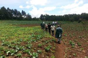 NAK deelt kennis over AM-onderzoek Kenia