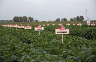Pootgoedprijs+Agrico%3A+23%2C62+euro