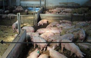 67%2E124+handtekeningen+tegen+varkenshouderij