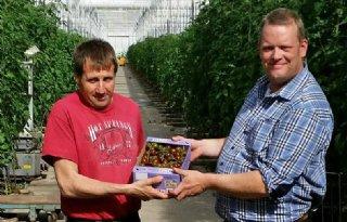 Nieuwe biologische tomaat: Choco Tom