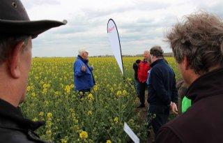 'Opbrengst koolzaad naar 5 ton per hectare'