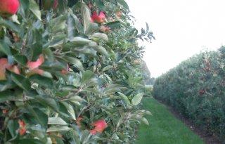 Opnieuw lichte stijging van fruitareaal
