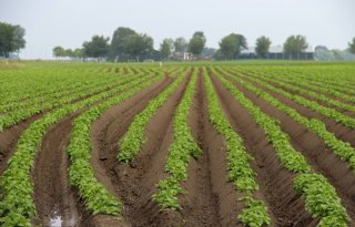 1%2E500+hectare+meer+pootgoed