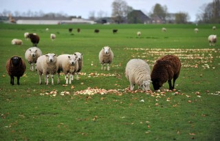Compensatie ozb voor boeren Leeuwarden dichtbij