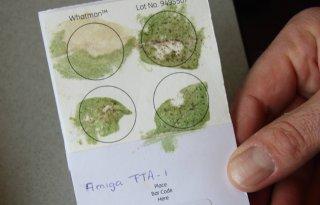 Wereldwijde aanpak phytophthora