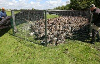 Protest tegen breken ganzennekken