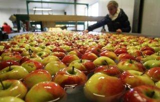 Fruitsector+claimt+De+Fruitigste+te+zijn