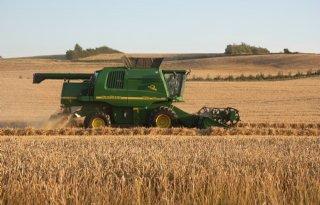 IGC+verhoogt+oogstprognose+tarwe