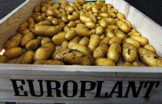 Poolprijs+Europlant+pootgoed%3A+26%2C51+euro
