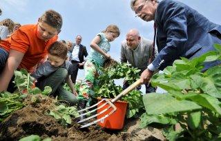 Burgemeester NOP oogst aardappelen