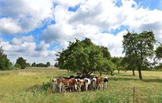 LTO+Noord+zet+vraagtekens+bij+natuurbegraven+in+Gelderland