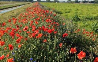 Bloemrijke+weilanden+polder+Langerak
